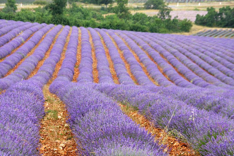 Bild: Lavendelroute