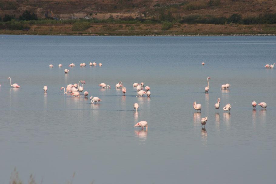 Bild: Camargue