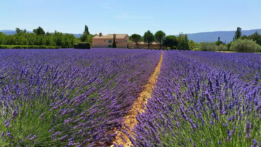 Bild: Lavenderoute hier an der D900