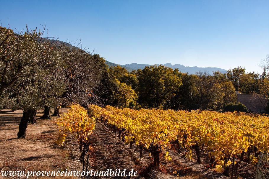 Bild: Herbst in den Dentelles de Montmirail