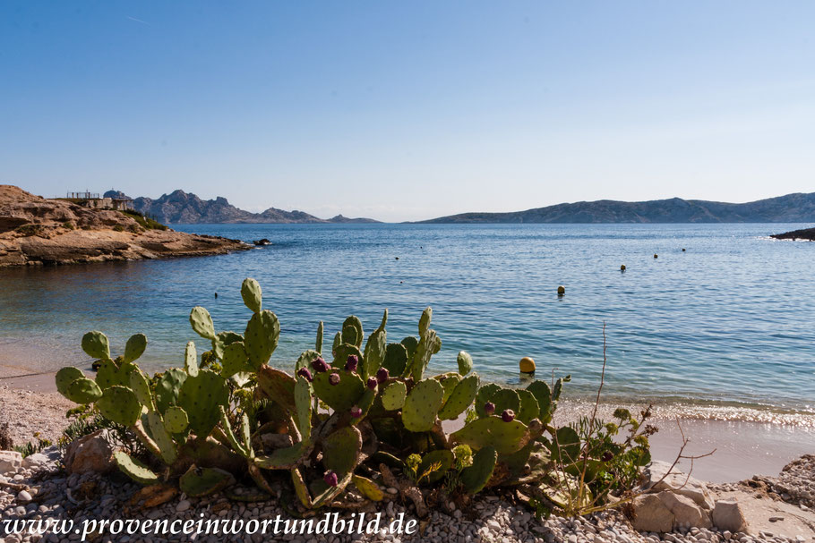 Bild: Wanderung bei Callelongue zur Calanque Marseilleveyre, hier Calanque de Marseilleveyre