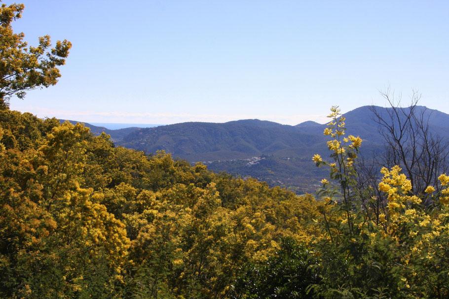 Bild: Im Mimosenwald