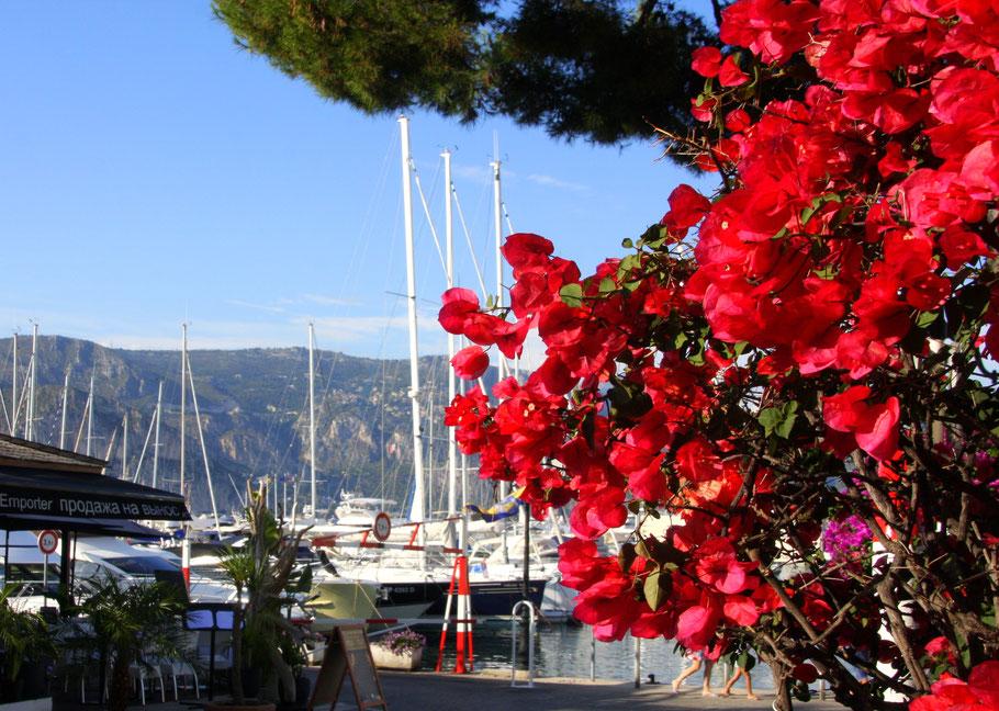 Blütenpracht an der Côte