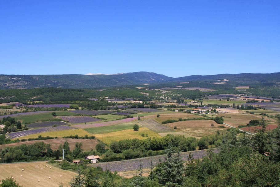 Bild: Blick auf die Lavendelfelder von Sault, im Hintergrund der Mont Ventoux