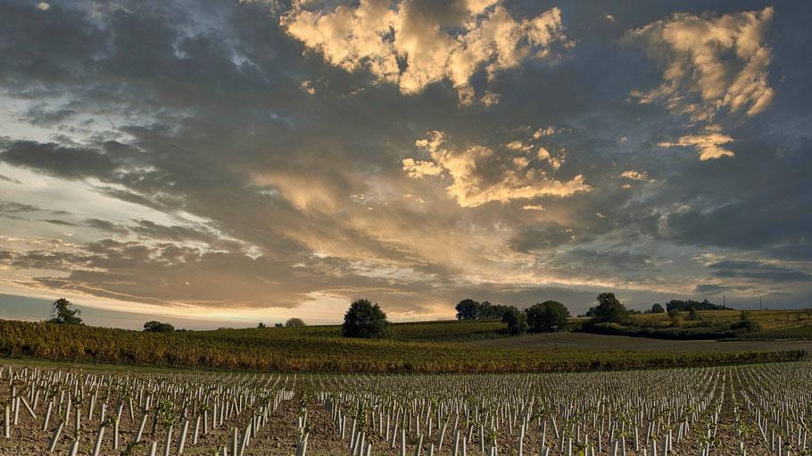 Bild: Weinberge in der Dordogne