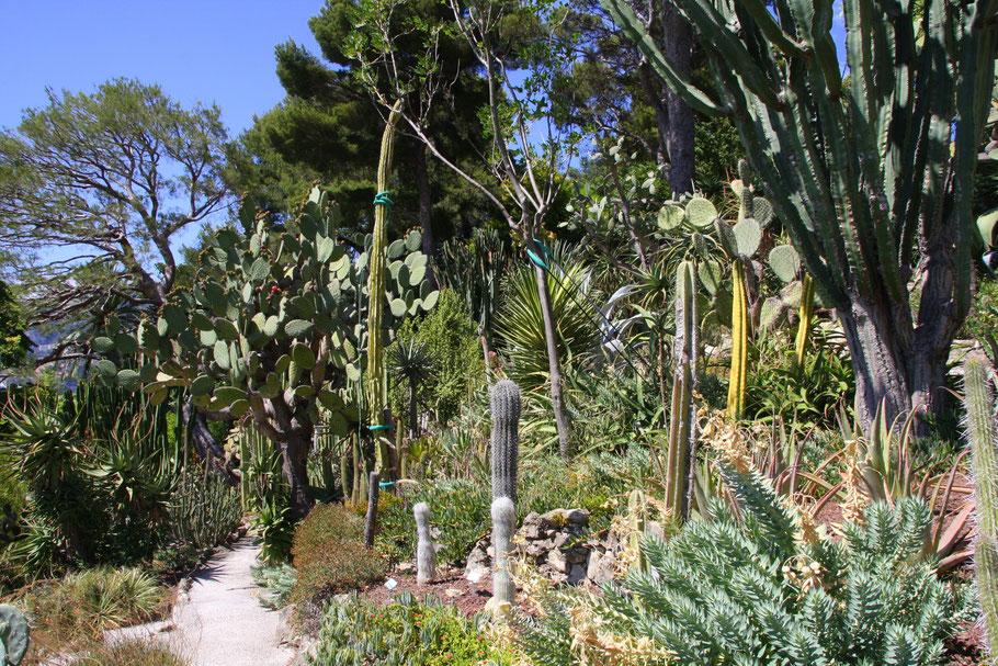 Bild:im exotischen Garten des Musée Ephrussi de Rothschild