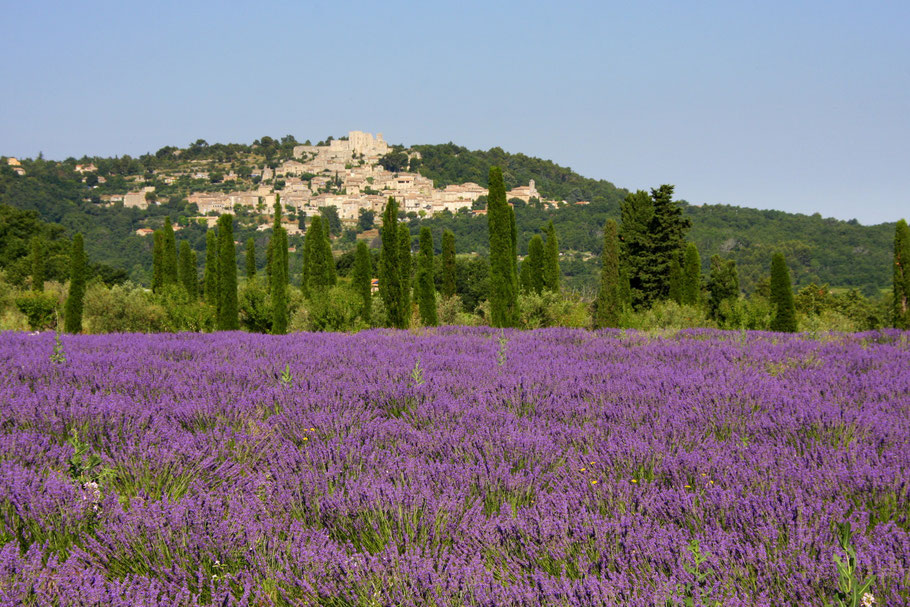 Bild: Lacoste mit Lavendelfeld