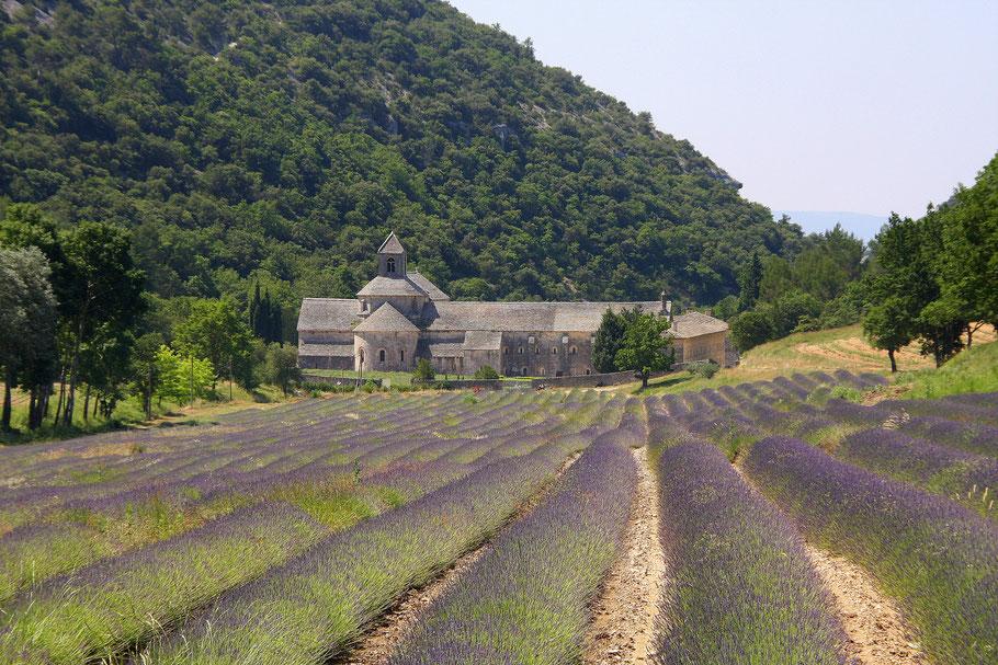 Bild: Abbaye de Sénaque bei Gordes, Vaucluse, Provence