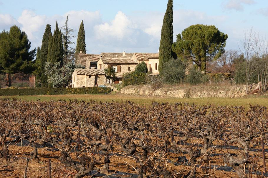 Bild: Weinberge im Winter in der Provence