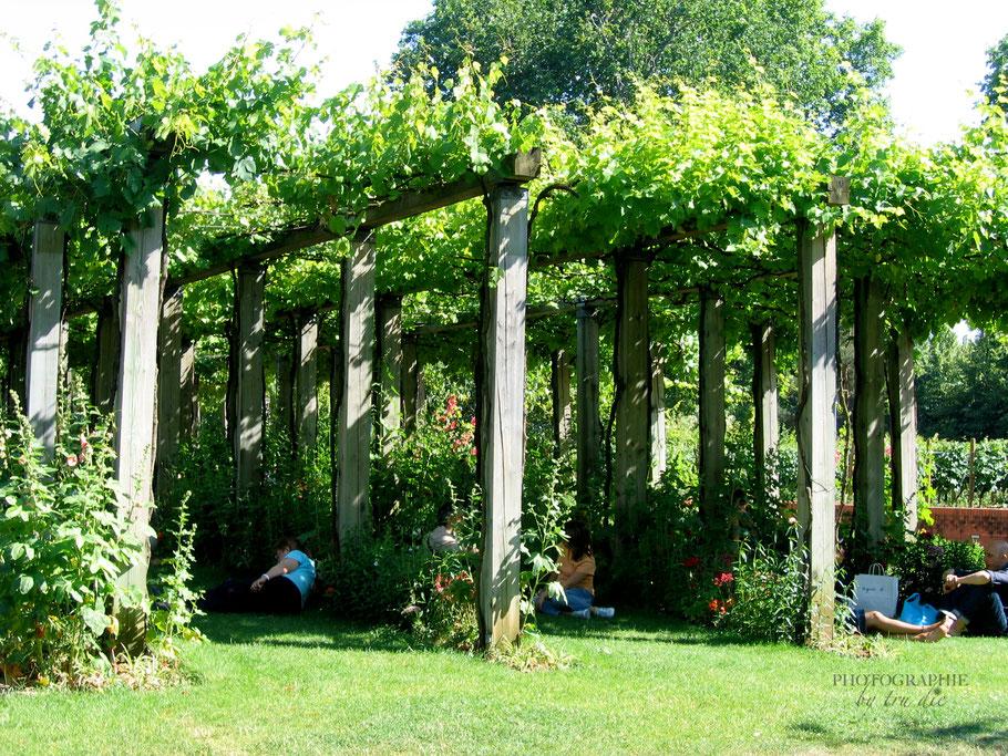 Bild: Pergola-Gehwegen im Jardin Romantique im Jardin Yitzhak Rabin im Parc de Bercy