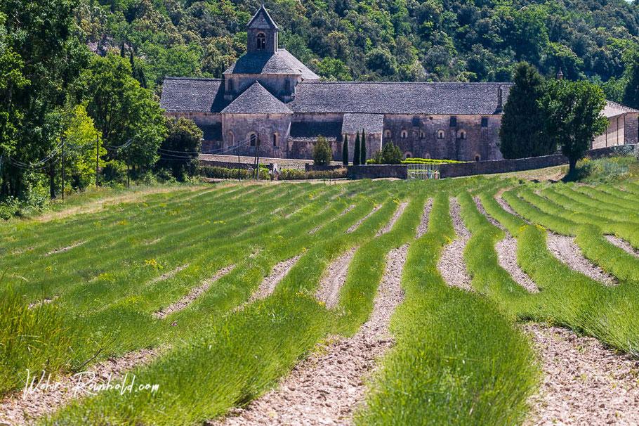 Bild: Abbaye Notre Dame de Sénanque, Gordes
