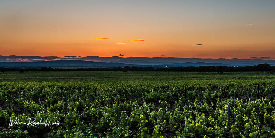 Bild: Sonnenuntergang in den Weinbergen von Gigondas