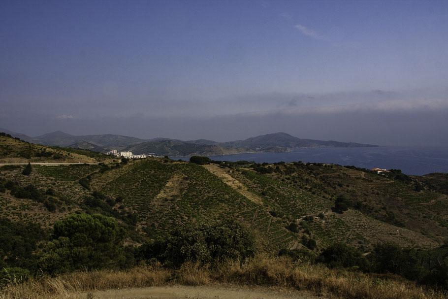 Bild: Blick auf Banyuls-sur-Mer, Weinberge bis an die Küste