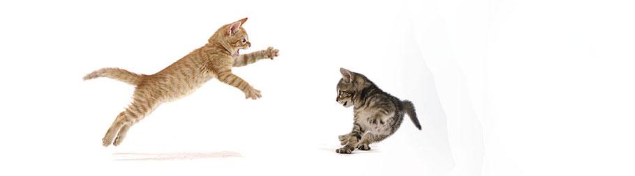 Kranke Katzen gesund machen? Das schafft Ihr Tierarzt im Bezirk Mödling.