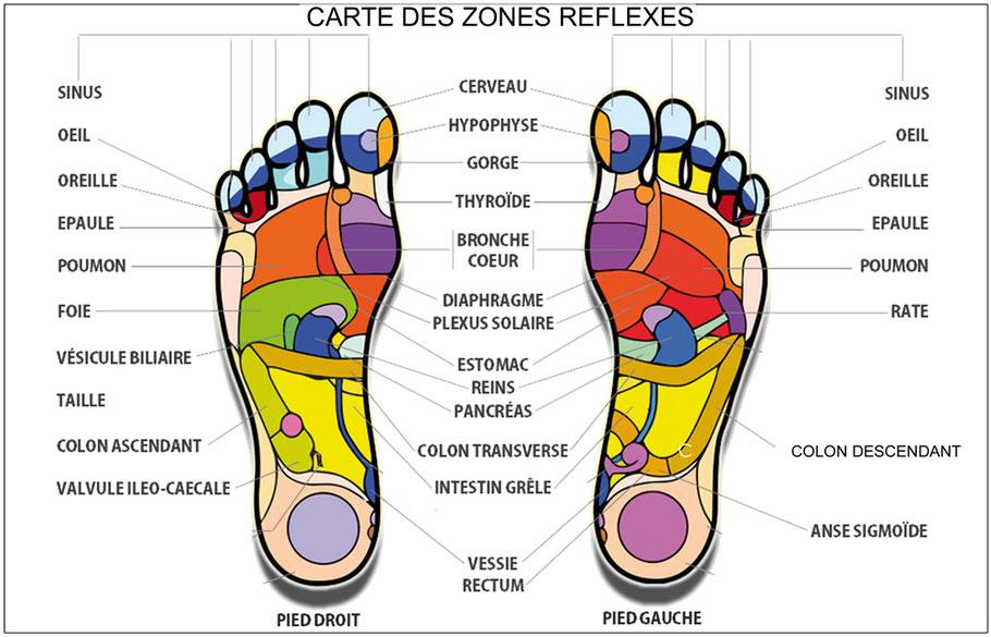 carte des zones reflexes en réflexologie plantaire
