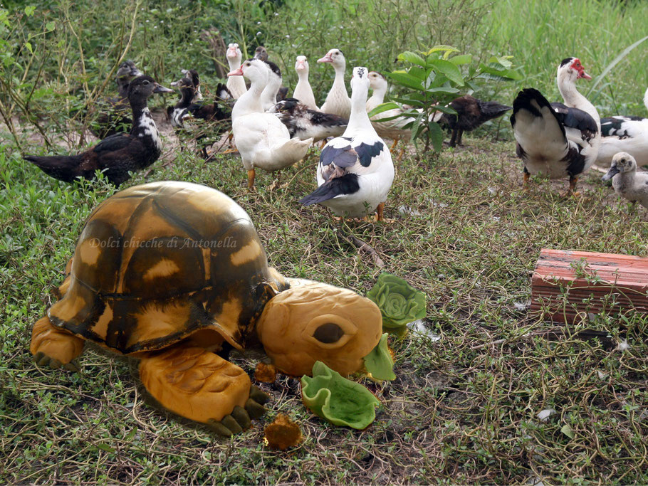 tartaruga-turtle-torte-dolci-la spezia-liguria