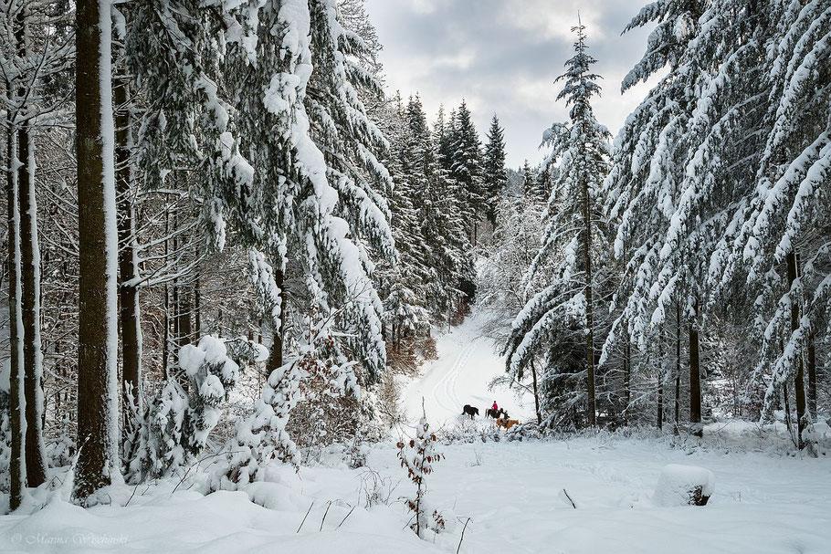 Reiter im Winterwald