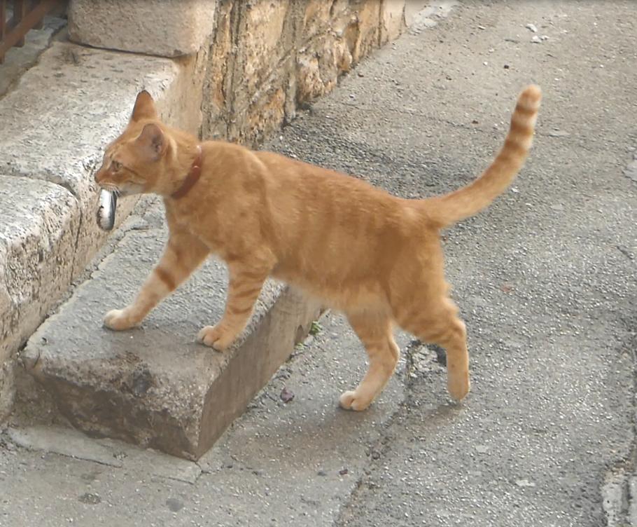 Même le chat va au marché.