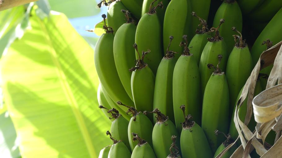 Quelques bananes glâner sur la route peuvent participer au ravitaillement !