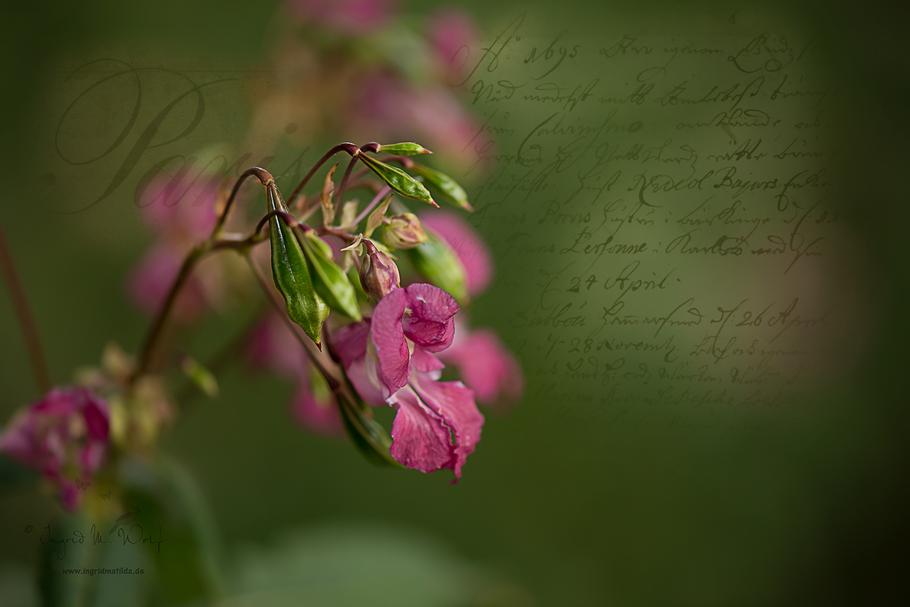Composing mit einer Hintergrundtextur von © Kerstin Frank Art