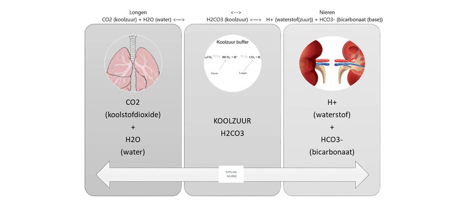 zuur-base evenwicht, koolstofdioxide, alkalose, acidose