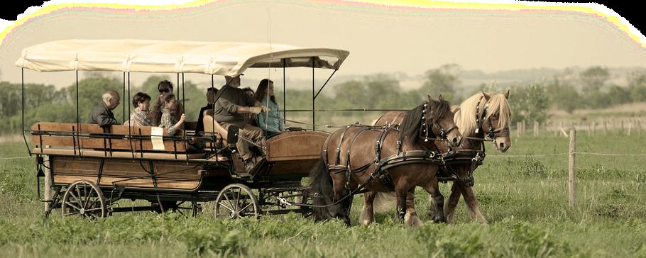 chevaux de trait, calèche, promenade, Charente Maritime, 17
