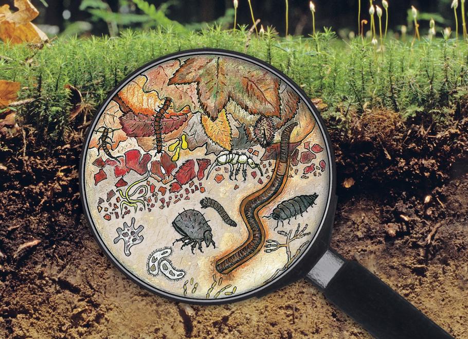 In einem gesunden Boden leben viele unterschiedliche Pflanzen, Tiere und Pilze. - Bild: Sounding Soil