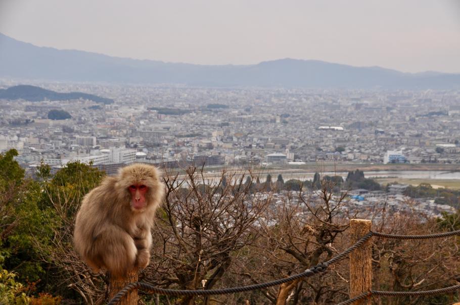 Affe Monkeypark Kyoto