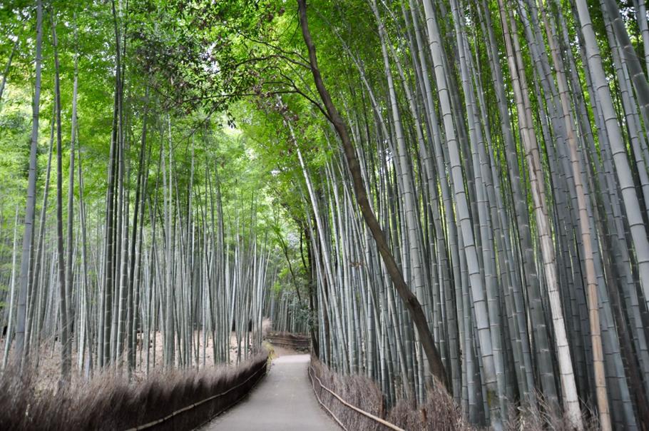 Erlebe Japans Zauber In Kyoto Findsomebeautifulplaces