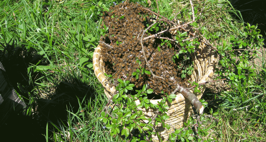 Paysage ruches warré