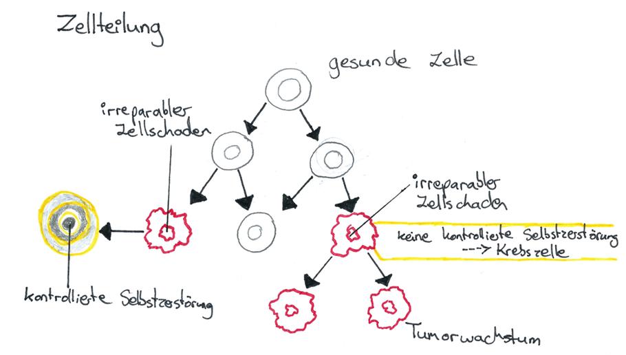 Abb. 1: Irreparabler Zellschaden bei der Zellteilung (vereinfachte Darstellung)