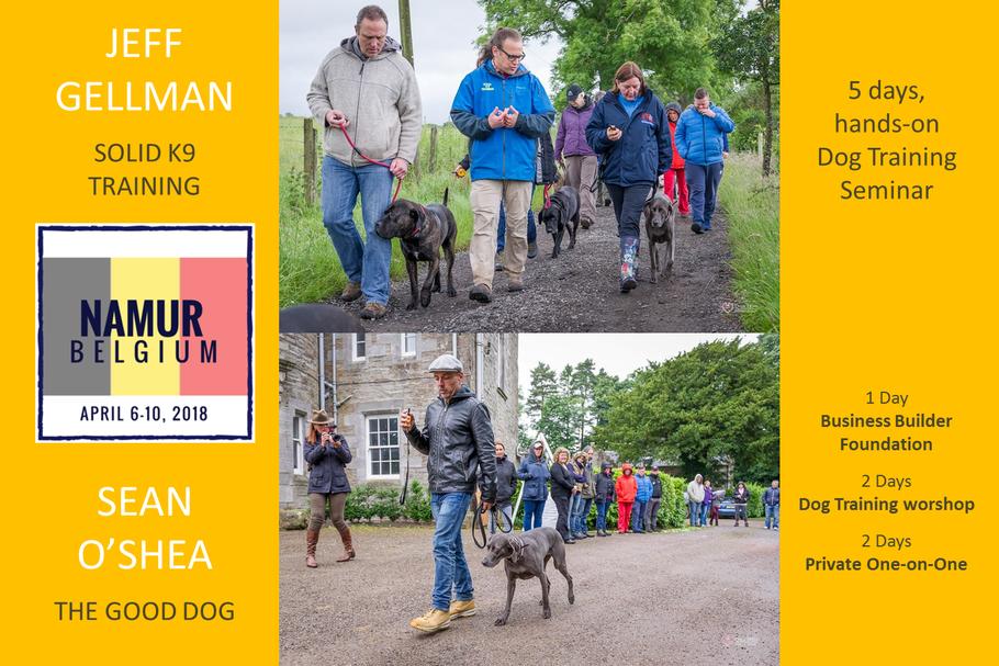 Stage et cours d'éducation Canine en Belgique - Namur 2018