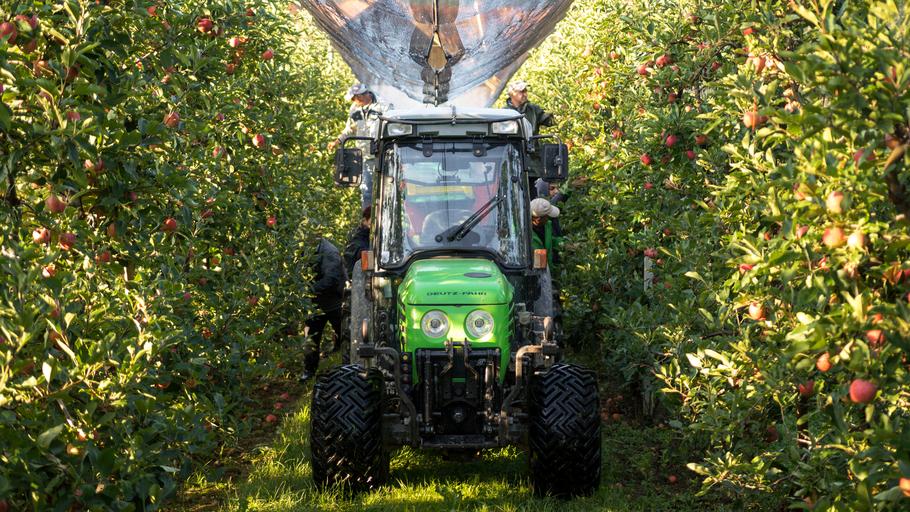 Arbeiter bei der Apfelernte mit einem Obsttraktor im Vordergrund