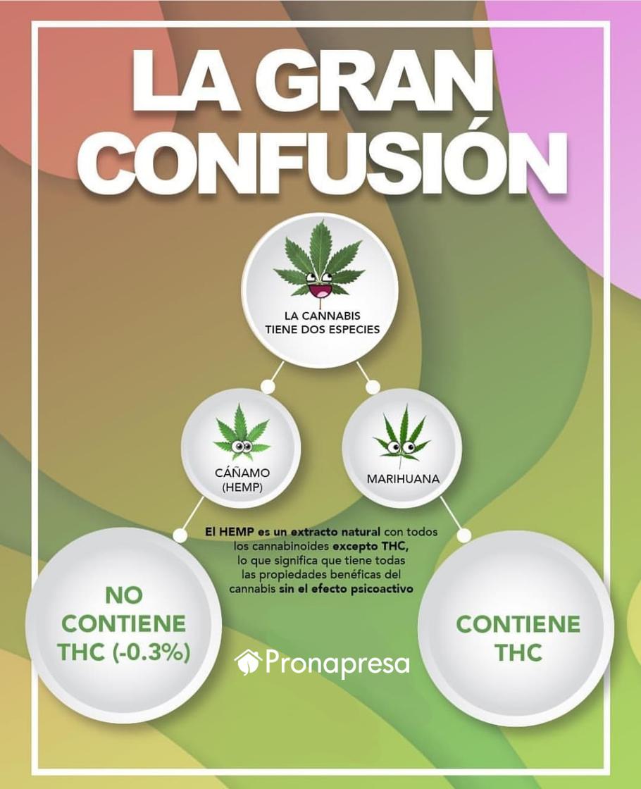 El aceite de cáñamo o hemp tiene concentraciones altas de CBD y bajas de THC, a diferencia de la marihuana