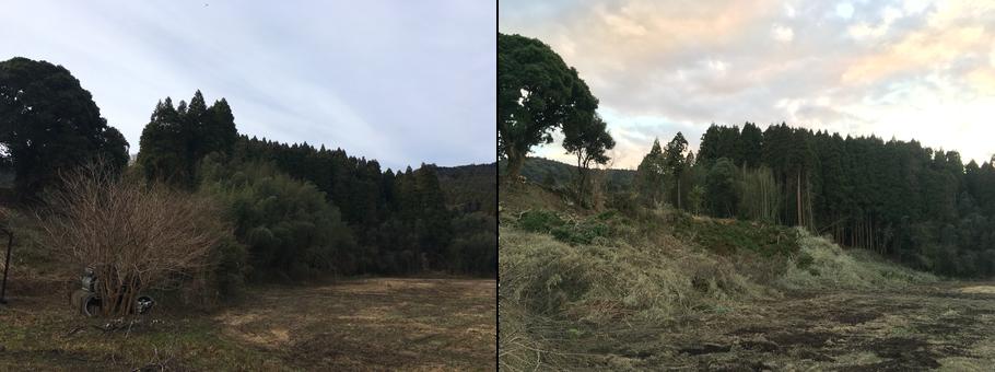 耕作放棄地 里山 杉 竹 竹林 伐採