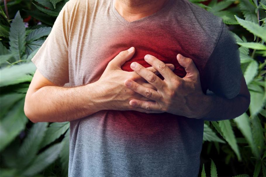 Une étude scientifique a prouvé que le cannabis médical pourrait réduire le taux de mortalité après une crise cardiaque et avc