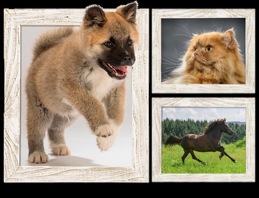 Hundefotografie; Hundeportraits