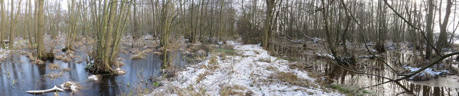 Links het Adderbroek met ijs (regenwaterlens) en rechts de Zompesloot en Golfbroek zonder ijs (kwel).