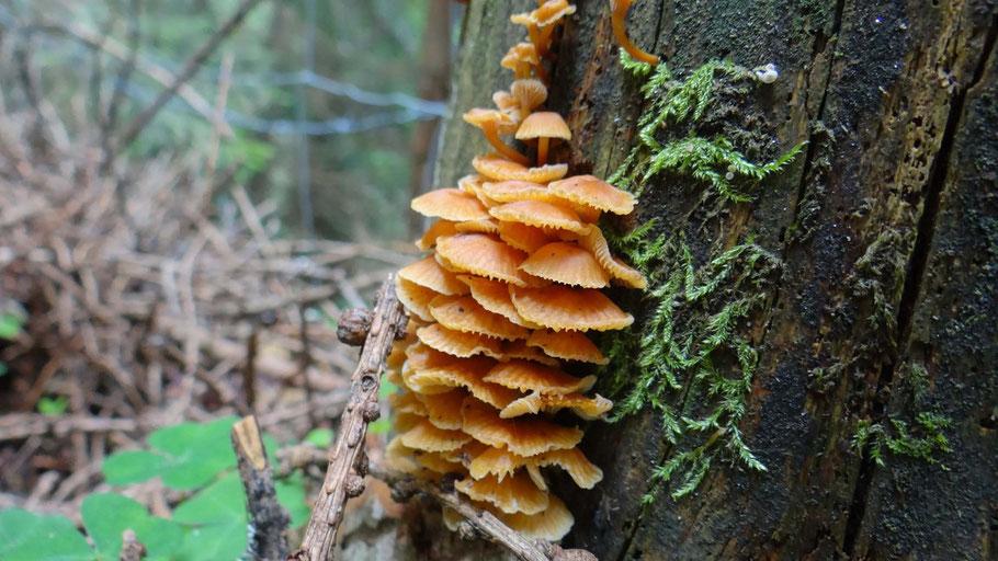 Paddestoel op boomstan van www.canvastirol.nl