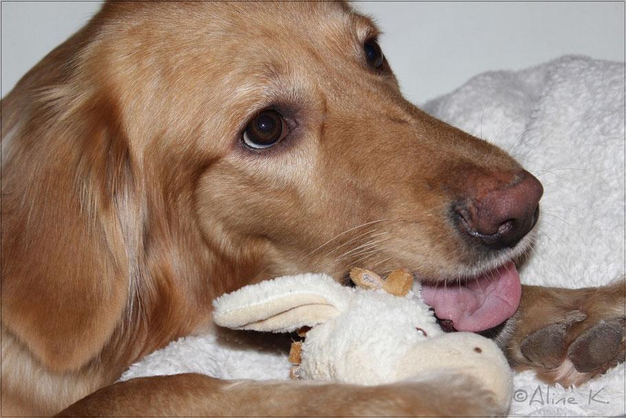 Bellis mit einem ihrer Weihnachtsgeschenke
