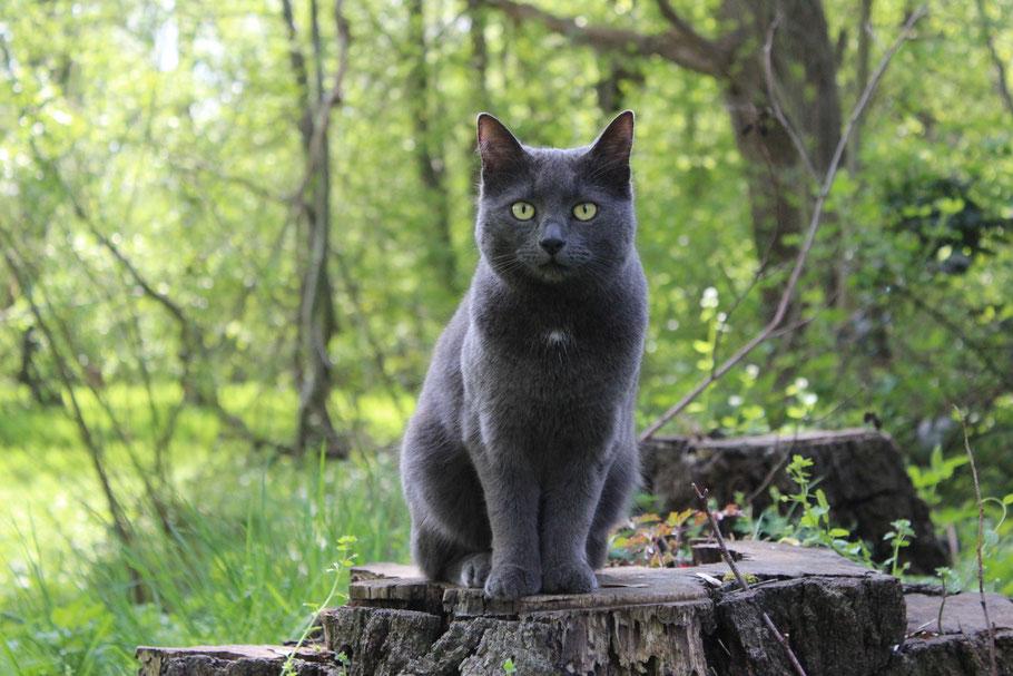 Lotti (Katze)