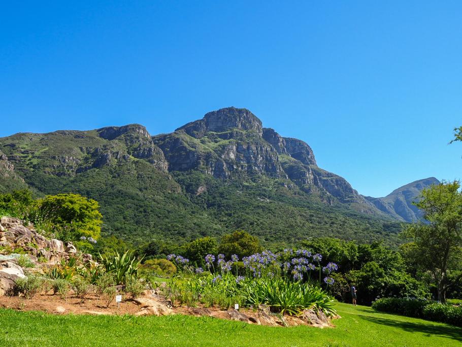 Botanische tuin Kirstenbosch
