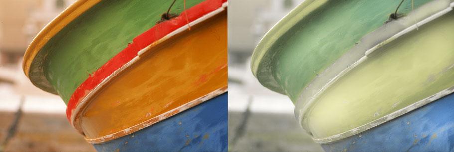 Das farbenfrohe Boot (links), sehen Hunde, wie viele andere Säugetiere weit weniger bunt.