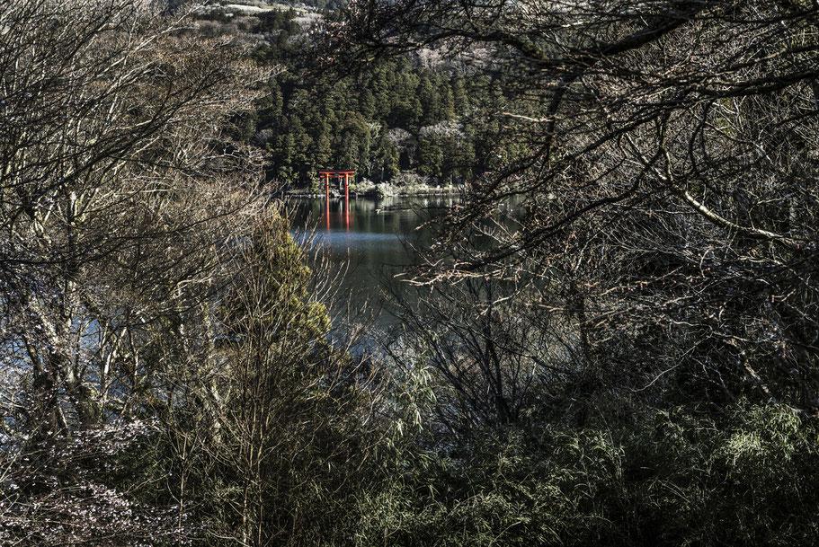 Der Shrine von Hakone frühmorgens als Farb-Photographie, Japan