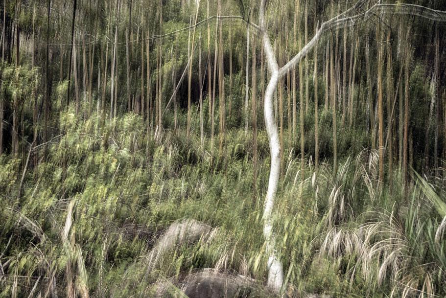 Naturaufnahme aus Tajan in Taiwan, als Farbphoto
