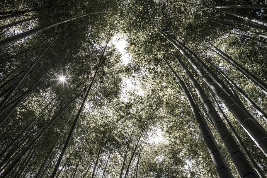 Bambuswald im Hokokuji Temple in Kamakura, Japan als Farbphoto