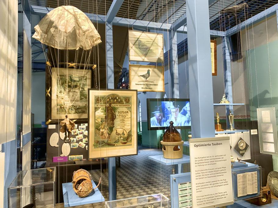 Blick in die Ausstellung Zeche Hannover, LWL Museum, Bochum, Verband Dt. Brieftaubenzüchter, Fallschirm für Brieftauben, Brieftauben historisch