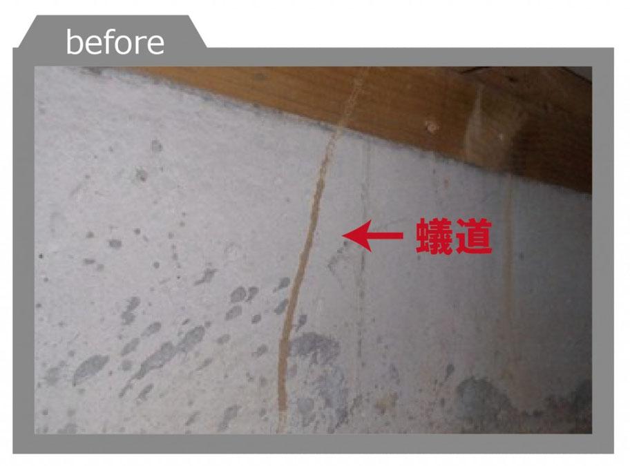 シロアリによる蟻道の形成 シロアリ消毒を実施