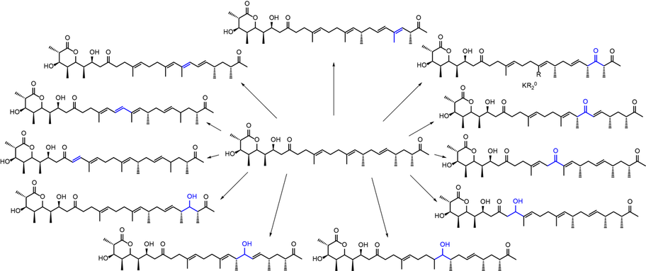 Polyketide Derivatization Polyketid Derivatisierung  - Schulz Laboratory Ruhr-Universität Bochum