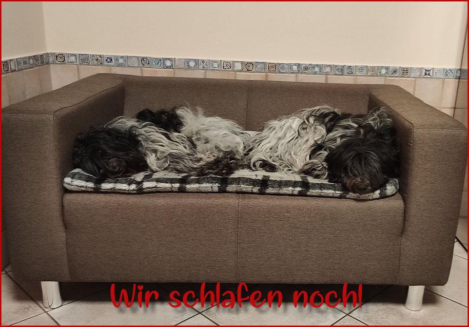 Zwei müde Hunde schlafen auf der Hundecouch